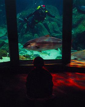 Un niño disfruta del Aquarium Finisterrae en A Coruña