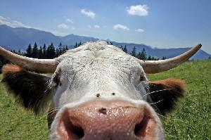 Adivinanzas sobre animales