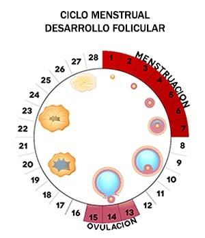 En fecundar espermatozoide un a un cuanto tarda ovulo tiempo