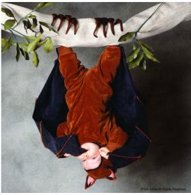 Disfraz para bebés de murciélago por Tom Arma