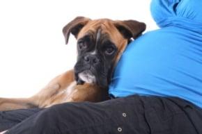 Embarazo y mascotas