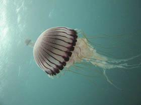 Picaduras de medusas en bebés y niños