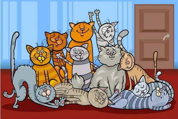 gatos articulos: