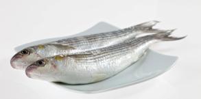 el pescado y el marisco en la alimentación infantil de los niños