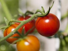 Los tomates provenzales son muy sencillos
