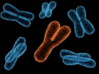 Existen diferentes tipos de alteraciones cromosómicas