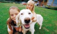Chistes para niños sobre animales