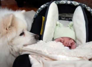 Bebé recién nacido y mascota perro y gato
