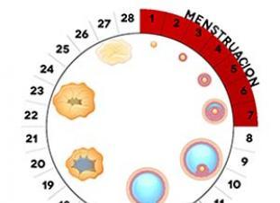 Ciclo menstrual: días fértiles y menstruación | Elbebe.com