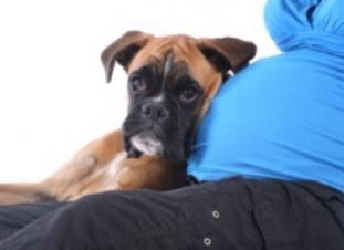Recomendaciones para un embarazo seguro... ¡con mascotas!